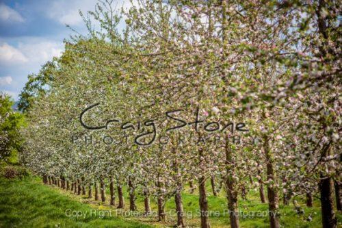 Sheppy's Cider Farm – Image 7